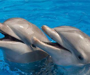 Encuentro con delfines en Nuevo Vallarta