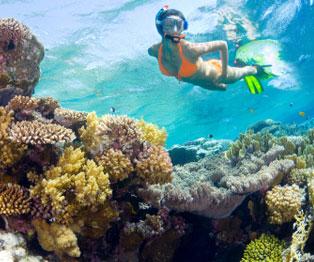 Tour de snórquel en Riviera Maya
