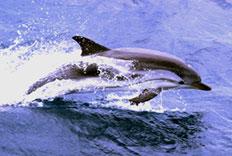 Paquete de Delfines de nuestro hotel en Puerto Vallarta
