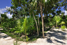 Cruce de Jungla en Riviera Maya Quintana Roo