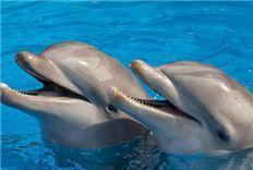 Paquete nade con delfines en Quintana Roo